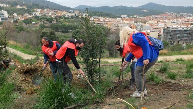 Sant Boi reforesta el sector del parque de la Muntanyeta que se incendió el pasado verano