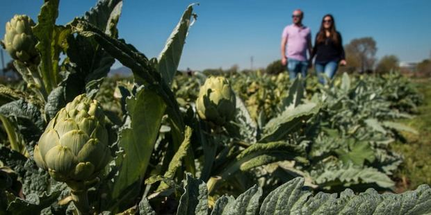 Los payeses de El Prat denuncian hurtos en sus campos durante los fines de semana