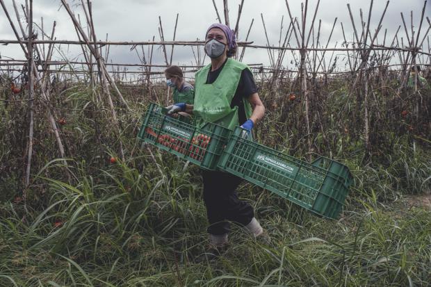 La Fundació Espigoladors recupera 7.236 kg de fruta y verdura en la 1ra maratón de espigadas para el aprovechamiento alimentario