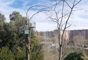 Sorprendido un vecino de L'Hospitalet instalando trampas ilegales para cazar pájaros