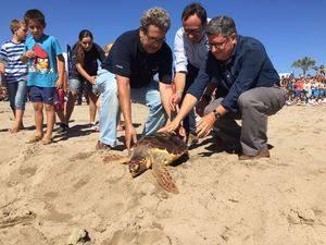 El CRAM torna cinc exemplars de tortugues recuperades de les seves lesions
