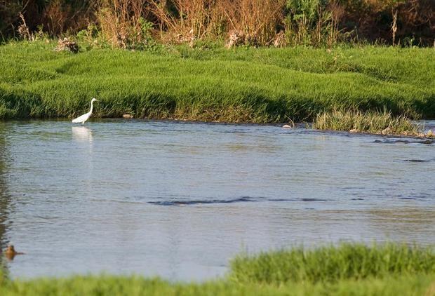 Ponen a prueba el río Llobregat para mejorar la calidad del agua