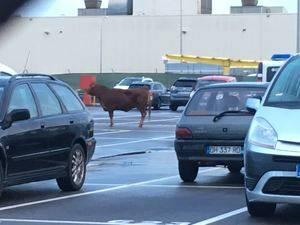 Imagen de la res en el parking de Nissan